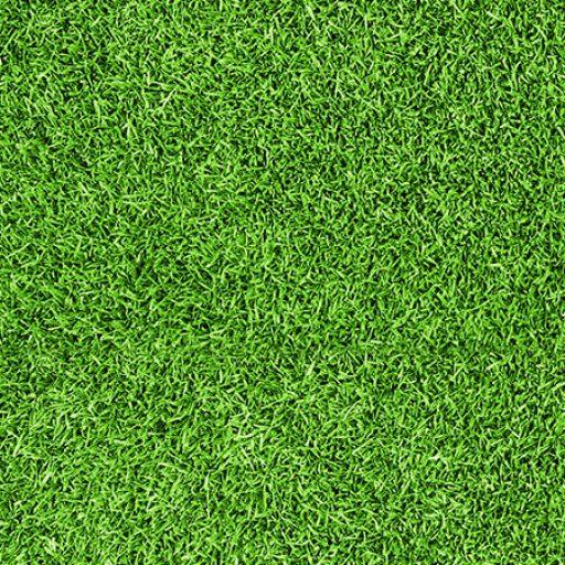 cropped-Grass.jpg - cropped-Grass.jpg